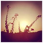 Plants: image 4 0f 4 thumb